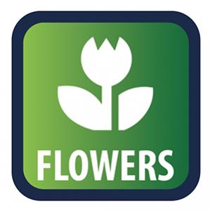 Direct bloemen kopen om de 24/7 KPS marktplaats