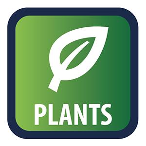 Direct planten kopen om de 24/7 KPS marktplaats